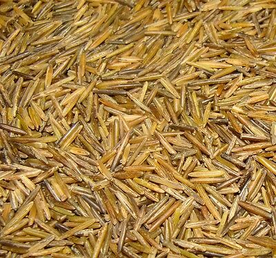 5 Lbs Hand Harvested Wood Parched Minnesota Lake Wild Rice 100% Mn Natural