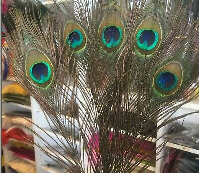 5pcs Natural Peacock Eye Feathers 25-30cm DIY Craft Millinery Vase Decor Costume