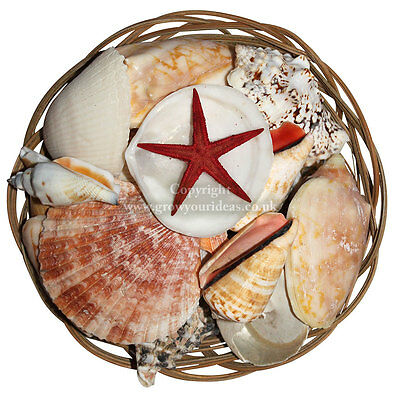 Assorted shells in basket 15 cm Seashells for crafts, weddings, aquariums