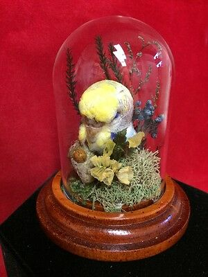 Taxidermy Blue Parakeet Budgie Antique Victorian Style Glass display dome Bird