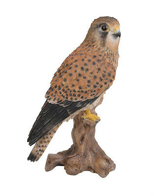 Vivid Arts - REAL LIFE BIRDS - Kestrel Bird Of Prey