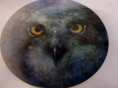 The Explorers Falling For Nightlife Picture Disc From 1984