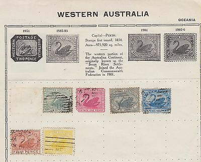 Ls155 Early Western Australian Swan Stamps  1885 Onwards On Old Album Page