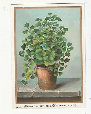 Wish You Joy this Christmas Time Potted Plant Embossed Vict Card c 1880s
