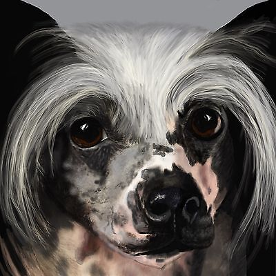 Print - A Chinese Crested - Merlin