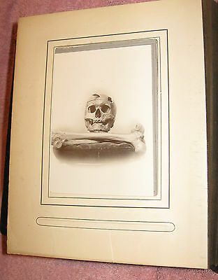 Yale 1910 Skull & Bones Leather Photo Album ~ 322 Society ~ Member Signatures