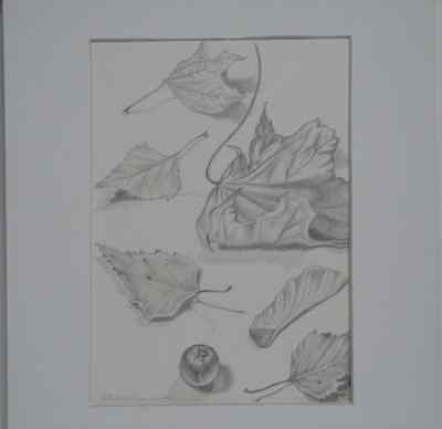Original Artist Signed Small Pencil Still Life Realism Drawing Leaves  LLLawton