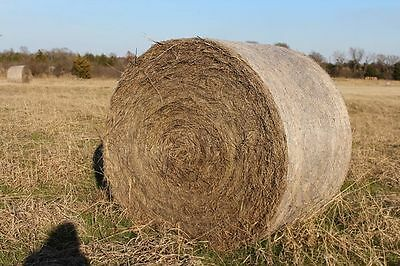 Hay Bales Round 5x4. 42 bales available