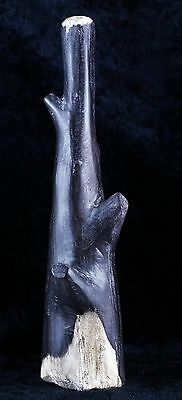 Fossilized Petrified Wood Branch Self Standing From Indonesia 66 Million Years