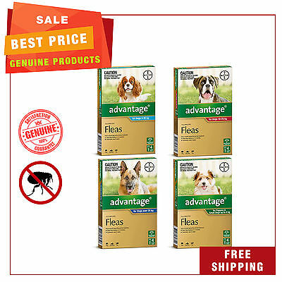 Advantage for Dogs All Sizes 4 Pipettes Flea treatment for Dogs