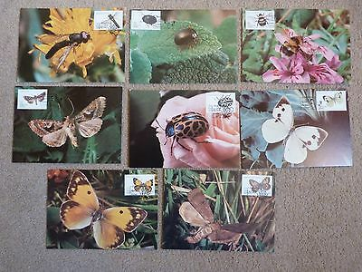 Azores Maximum Cards Insects