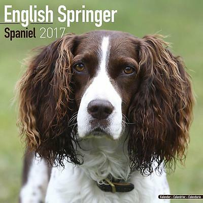 English Springer Spaniel 2017 Uk Square Wall Calendar New And Sealed By Avonside