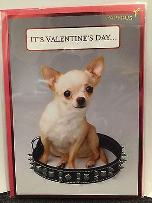 Papyrus Valentine's Day cards CUTEST DOG Chihuahua for anyone