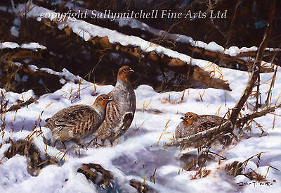 Grey Partridges in Snow Christmas cards pack of 10. c371x