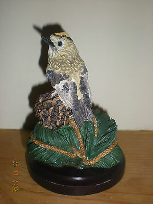 Country Bird Collection: Goldcrest