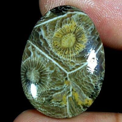 19.20Cts. 100% NATURAL MOROCCO FOSSIL CORAL PEAR CABOCHON FINE QUALITY GEMSTONES