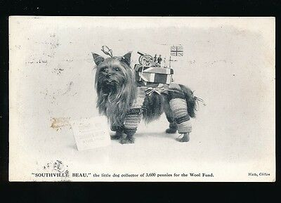 Animal DOG Southville Beau collecting 3600 pennies Wool Fund WW1 used 1915 PPC