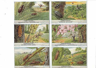Parasites of Agriculture.Liebig set F1690.Issued 1958.Full set of 6.