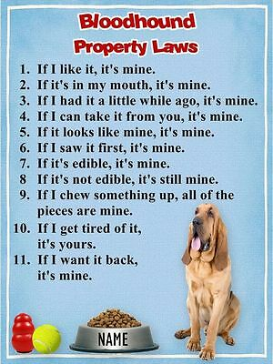 BLOODHOUND Property Laws Magnet