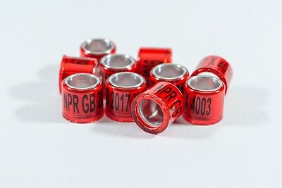 'NPR' 20 X GB 2017 8mm Pigeon rings - So much more than just a pigeon ring.