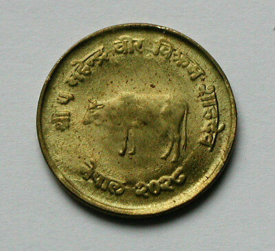 2028/1971 NEPAL Brass FAO Coin - 10 Paisa - AU+ toned-lustre - cow animal - 20mm