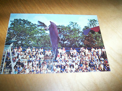 postcard windsor safari park with smartie the dolphin NEW