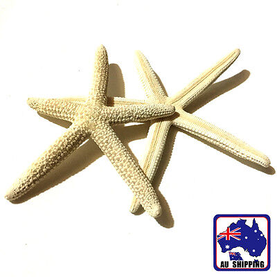 20pcs Fingers Starfish 5-15CM Sea Beach Wedding Coastal Decor Craft HDNB38800x20