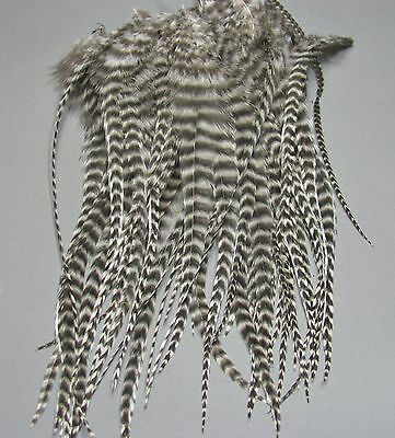 50 Grizzly Rooster Bugger Saddle Hackles - Fly Tying - Ties sizes 2, 4, 6, and 8