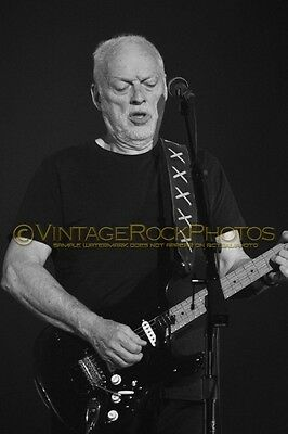 David Gilmour Photo 8x12 or 8x10 inch 2016 MSG NYC, NY Rattle That Lock Tour 83b