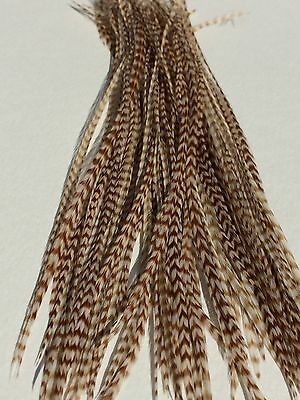 Lot of 100 Metz Ginger Grizzly Saddle Feathers - Fly Tying
