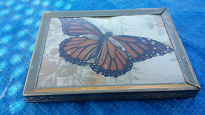 Vintage Real Butterfly Mounted in an Old Metal Frame