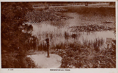 BOSHERSTON LILY PONDS, PEMBROKESHIRE, WALES : REAL PHOTO POSTCARD (1930s)
