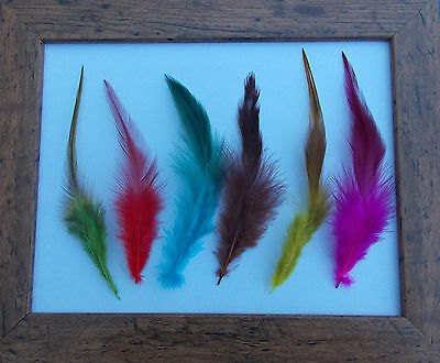 12 Rooster Feathers / Mixed Colours / Jewellery/ Crafts/ Earrings/ Costumes etc