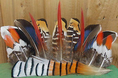 20 Natural Feathers 6.5-13cm oriental pheasant / duck / millinery / art & crafts