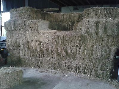Small Bale Hay 2016 crop