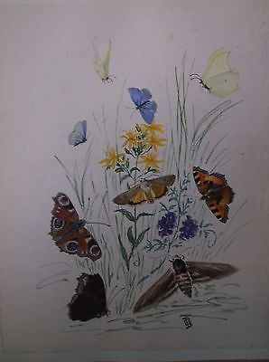 WATERCOLOUR PAINTING signed 1870s A STUDY OF BUTTERFLIES AND MOTHS