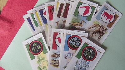 Players 1933 Cigarette cards - Boy Scouts & Girl Guides x 25