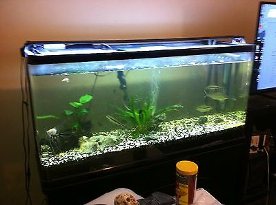 4ft Aquarium curved corners with cabinet + extras