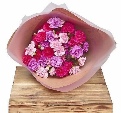 The Flower Rooms - Classic Spray Carnations Pinks Floral Wrap Sorry Flowers Love