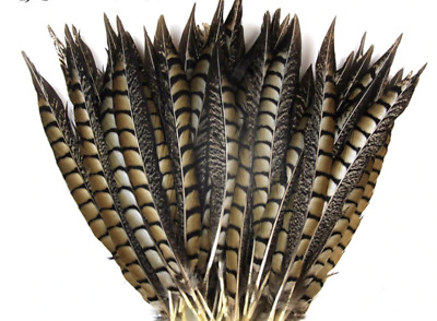 5 Natural Striped Pheasant Tail Feathers 30-37cm Craft Millinery Costume Vase