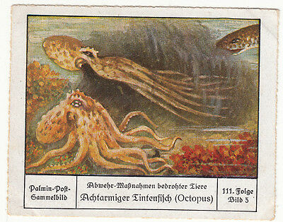 N°5 Endangered Animals Octopus Octopodes Germany Deutschland CARD IMAGE 30s