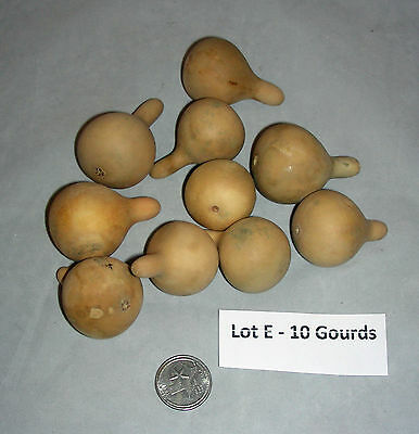LOT OF 10 CLEANED SPINNER GOURDS -  Great for Jewelry or Ornaments  (Lot E)