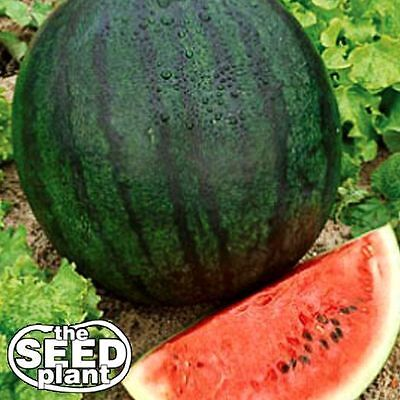 Sugar Baby Watermelon Seeds - 25 SEEDS-SAME DAY SHIPPING