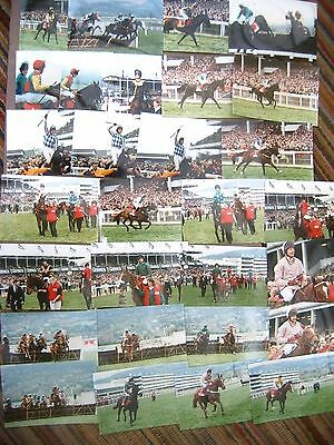 Racehorse Steeplechase Photos Cheltenham Gold Cup / Champion Hurdle...