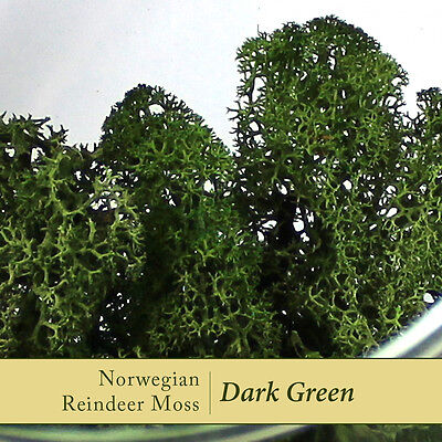 Dried Reindeer Moss | Dark Green - Perfect for air plants, terrariums & Crafts
