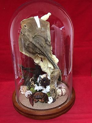 *Taxidermy Thorny Ray-Octopus-Horse Shoe Crab Nautical Ocean Glass Dome-marine