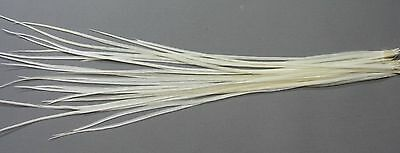 25 Metz Rooster Saddle Dry Fly Hackles - Cream - Fly Tying Material