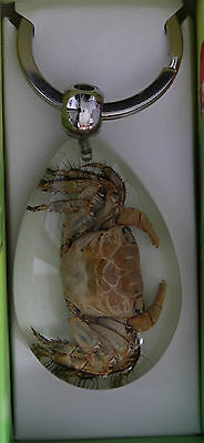 Real Marine Key Ring Crab Clear Teardrop Key Ring *end Of Range Sale* Nij41