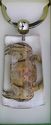 Real Shellfish Key Ring Crab Clear Oblong Key Ring **end Of Range Sale** Nij50