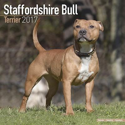 Staffordshire Bull Terriers Uk Square 2017 Wall Calendar With Free Uk Postage